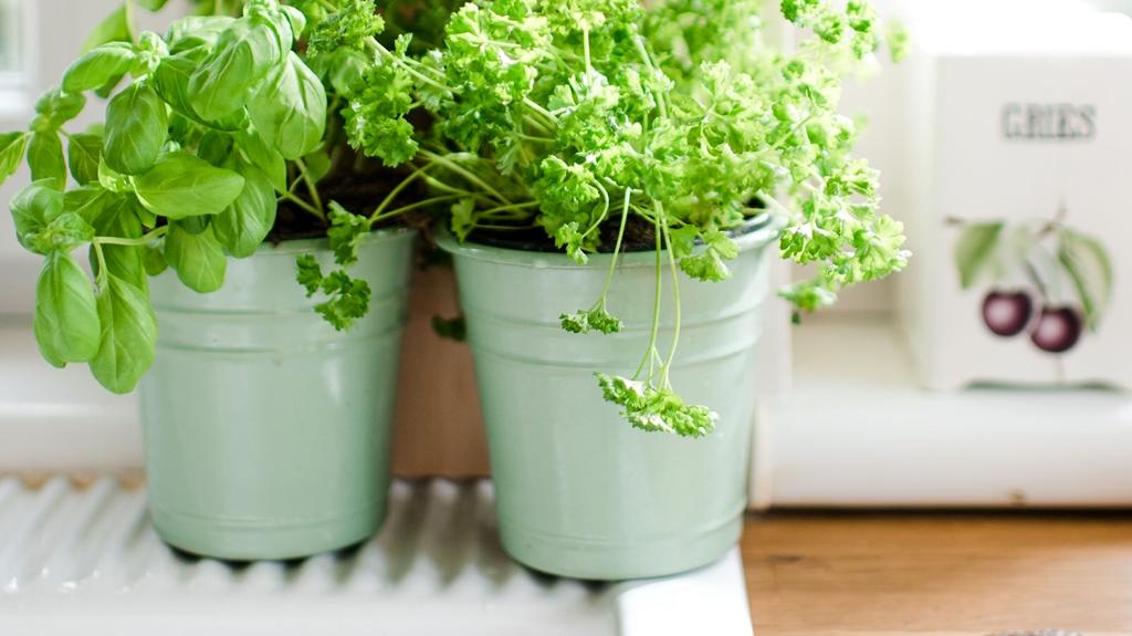 smoothie grün petersilie
