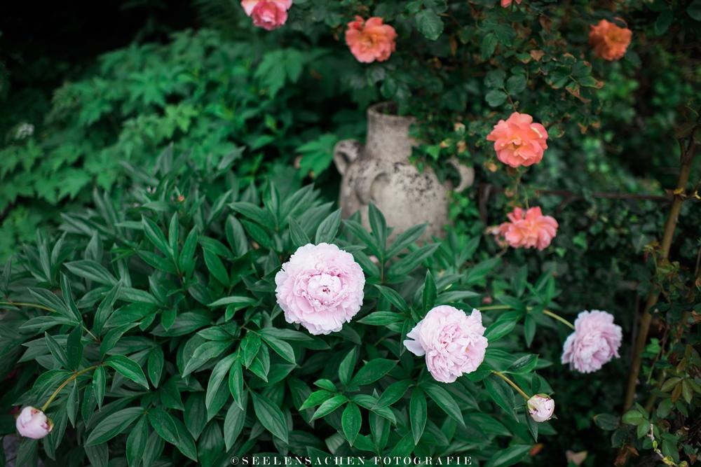 Sommerspecial: Ab in den Garten! ~ Rosen, nichts als Rosen
