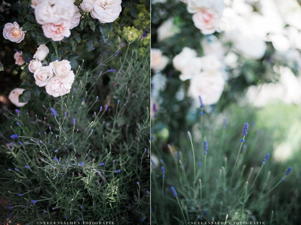 sommerspecial ab in den garten rosen nichts als rosen seelensachen. Black Bedroom Furniture Sets. Home Design Ideas
