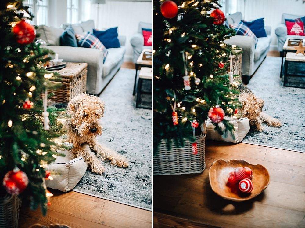 7. Dezember ~ Tierische Weihnacht
