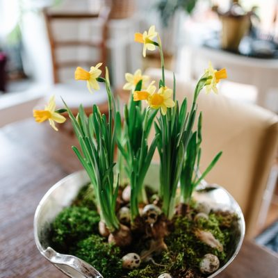 Den Frühling ins Haus holen